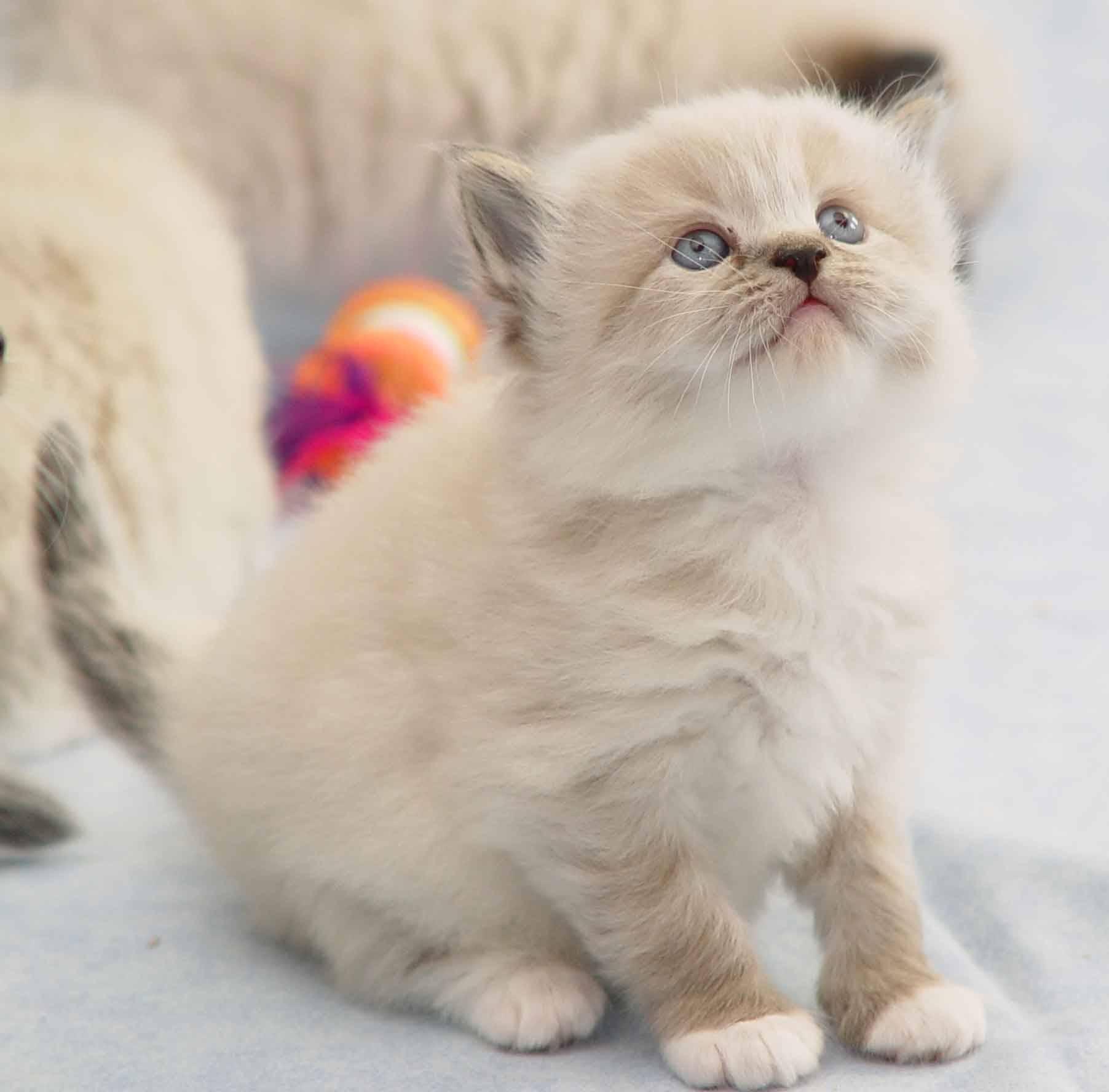 Blog Nya Penggemar Kucing Baca Dulu Baru Tau